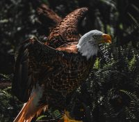 Changing Serpent to Eagle – Full Moon in Scorpio