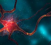 Neuro Health ~ Increase Your Brain Cells